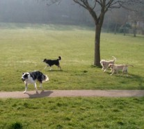 Dog walker in Eastbourne and Brighton