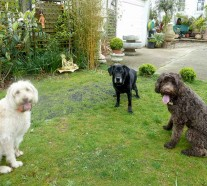 Dogs-sitting-in-a-garden-2