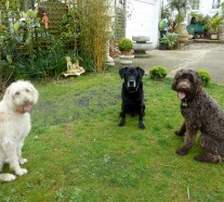 Dogs-sitting-in-a-garden