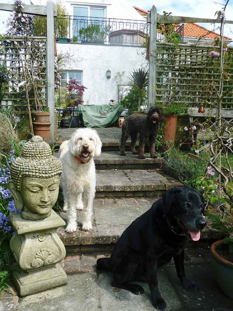 happy customers the sussex dog retreat
